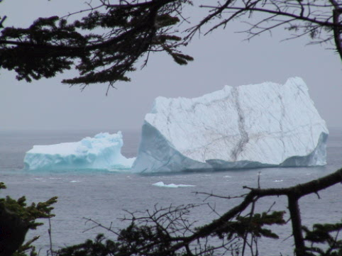 You may see icebergs along our shores
