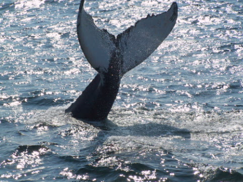 Whales are common visitors to our Seabird ecological reserves